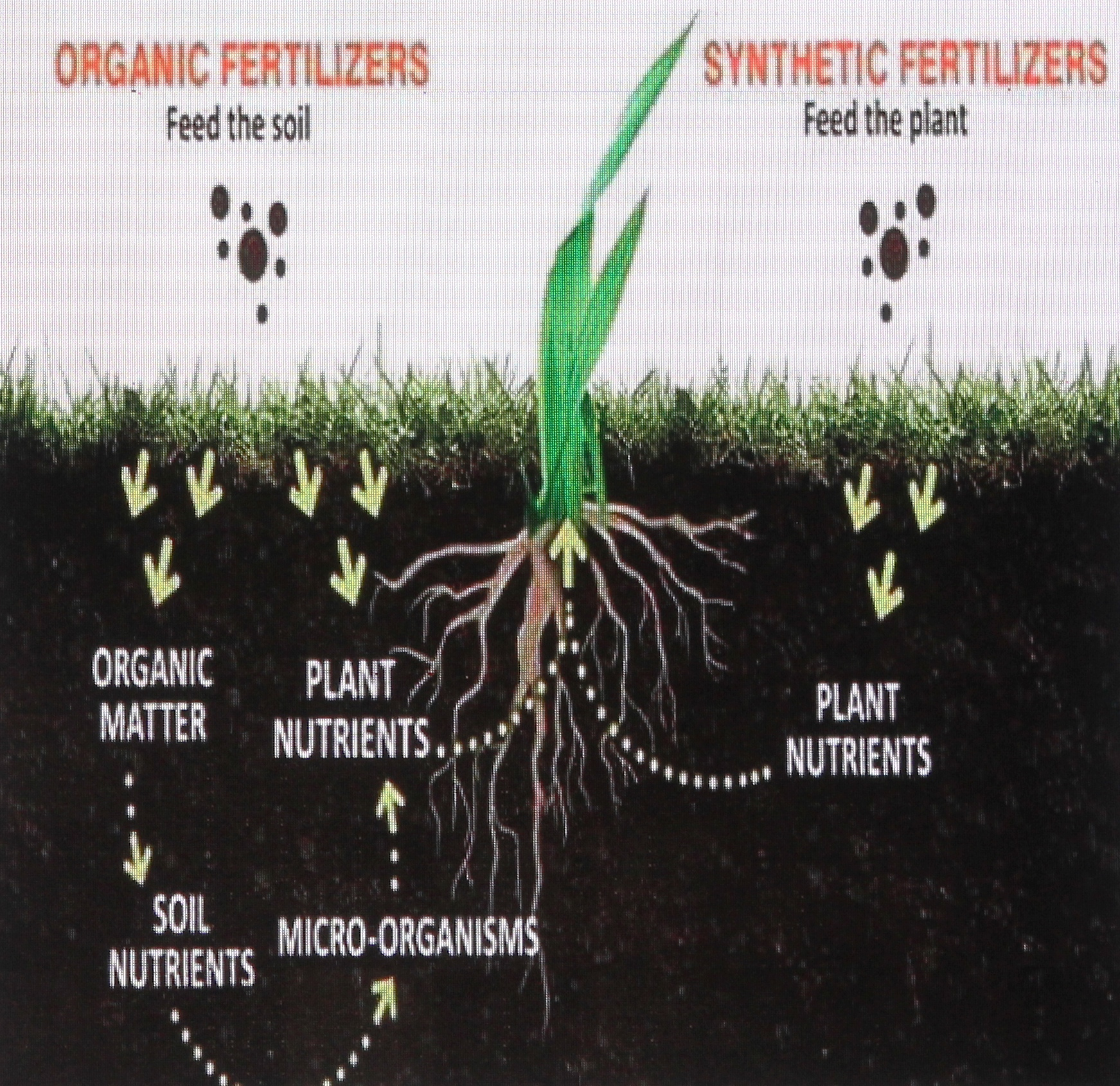 Types of Fertilizers.jpg